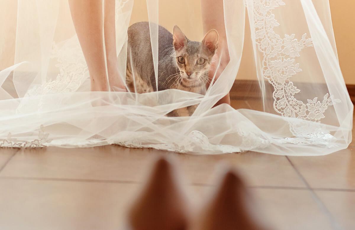 Mascotas en las bodas: gatos que acompañan a la novia