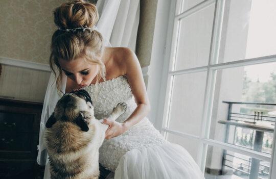 Formas de incluir a las mascotas en las bodas: ¡son un miembro más!