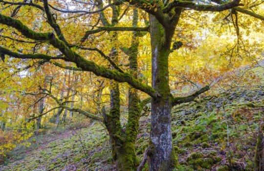 Rutas de senderismo por Avilés: de caminata en Otoño